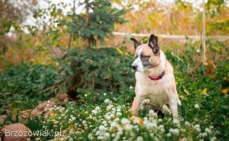 Frida -  łagodna,  wrażliwa sunia szuka odpowiedzialnego domu!